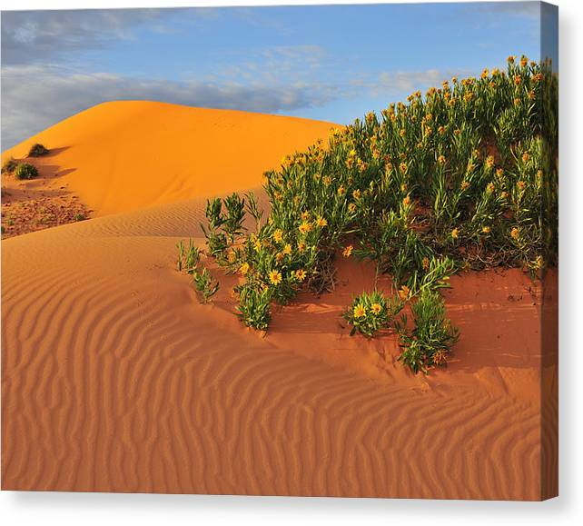 Limited Time Promotion: Coral Morning Stretched Canvas Print