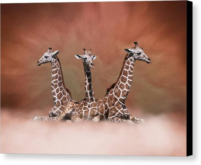 Studio Dalio - The Watchers Canvas Print