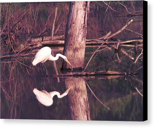 Great Egret Canvas Print featuring the photograph 070406-17 by Mike Davis