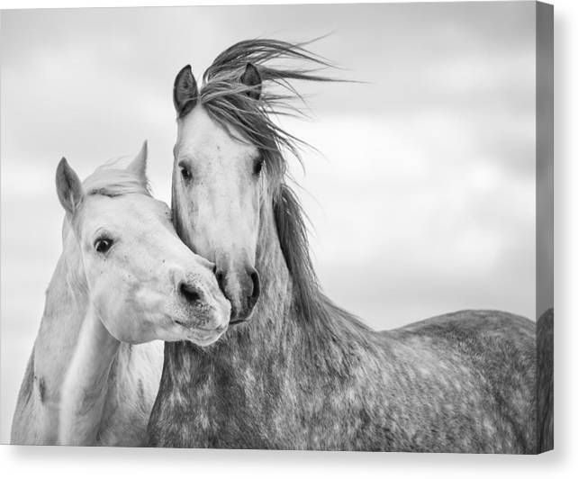 Horse Canvas Print featuring the photograph Best Friends I by Tim Booth