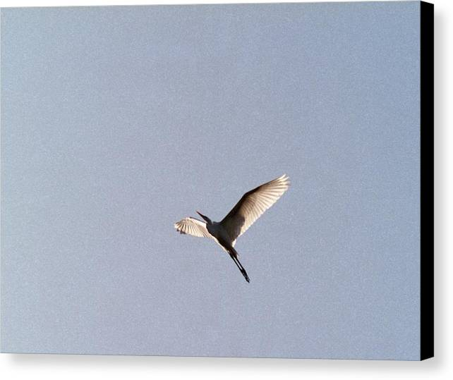 Egret Canvas Print featuring the photograph 070406-25 by Mike Davis