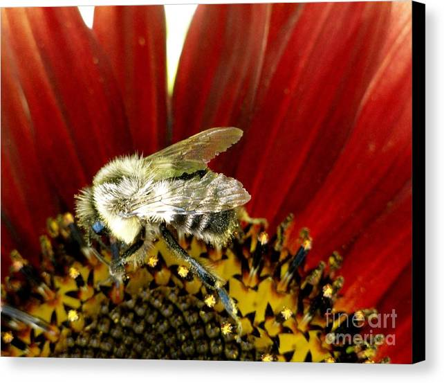 Bee Canvas Print featuring the photograph Bee Tip Toes by Trish Hale