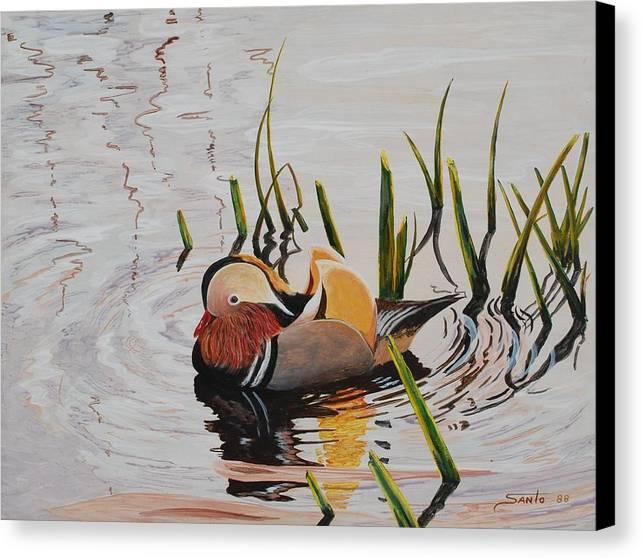 Realism Wildlife Duck Canadian Wildlife Canvas Print featuring the painting Mandarin Duck by Santo De Vita