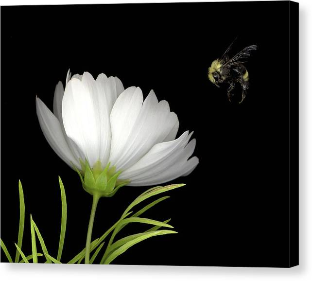 Cosmo Canvas Print featuring the mixed media Cosmo And Bee by Sandi F Hutchins