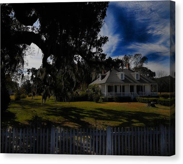 Plantation Canvas Print featuring the photograph Vibrant Plantation by Maggy Marsh