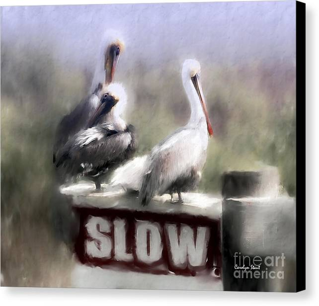 Seashore Birds Pelicans Tropical Humor Canvas Print featuring the painting Easily Follows Directions... by Carolyn Staut