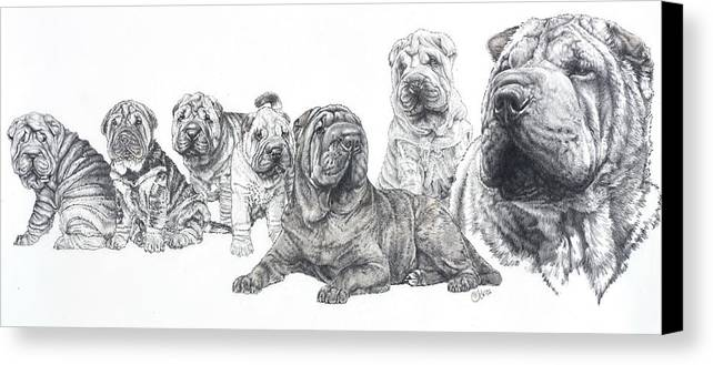 Dog Canvas Print featuring the drawing Growing Up Chinese Shar-pei by Barbara Keith