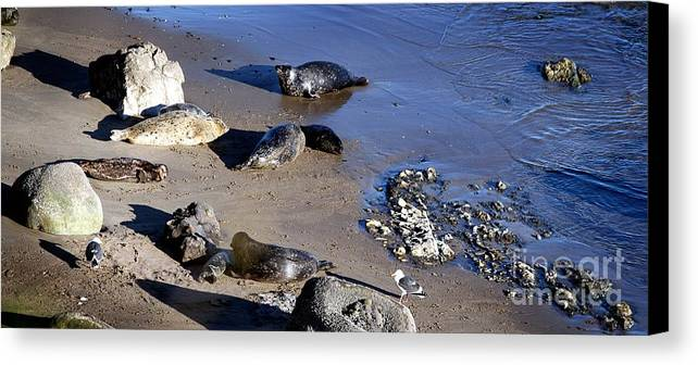Seal Canvas Print featuring the photograph Baby Seals by Henrik Lehnerer
