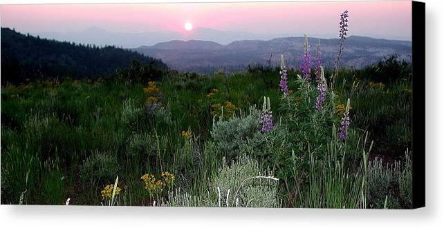 Sunset Canvas Print featuring the photograph Sunset Flowers by Earl Nelson