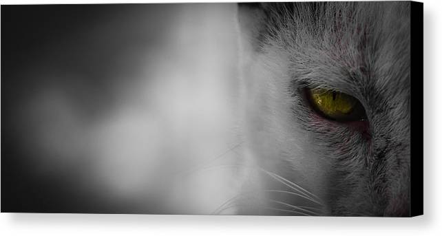 Cat Canvas Print featuring the photograph Hunger by S Rodriques