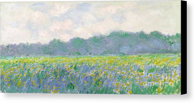 Canvas Print featuring the painting Field Of Yellow Irises At Giverny by Claude Monet
