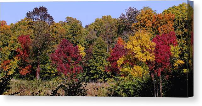 Colorful Trees On An Autumn Day At The Morton Arboretum Canvas Print featuring the photograph Autumn Colors by Rosanne Jordan