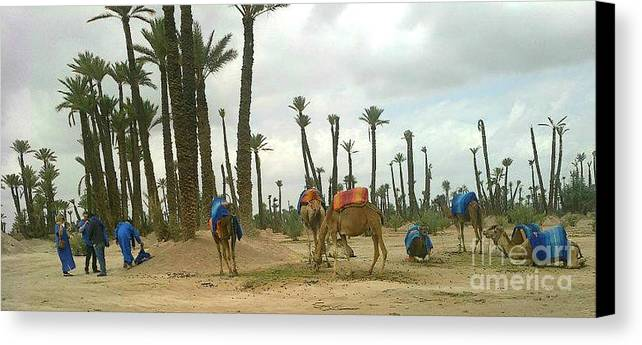 Animals Canvas Print featuring the photograph Camels by Bozena Simeth