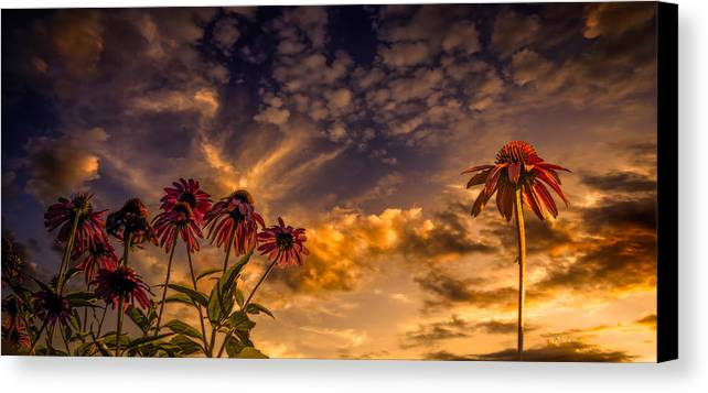 Flower Canvas Print featuring the photograph Echinacea Sunset by Bob Orsillo