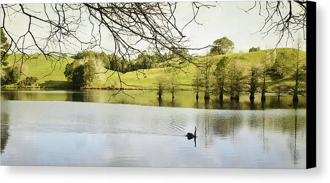 Swan Canvas Print featuring the photograph Swan by Les Cunliffe