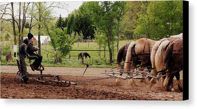 Amish Canvas Print featuring the photograph Spring Planting by Linda Mishler