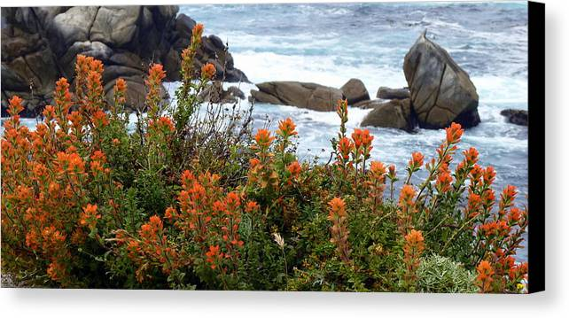 Indian Paintbrush Canvas Print featuring the photograph Indian Paintbrush At Point Lobos by Carla Parris