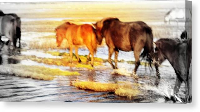 Horse Canvas Print featuring the photograph Our Whole Life We Just Follow The Stream by Hilde Widerberg