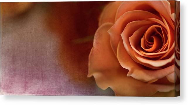 Rose Canvas Print featuring the photograph Haunted by Rebecca Cozart