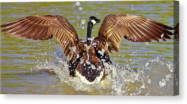 Wings Canvas Print featuring the photograph Wing Spand by Yvette Winder