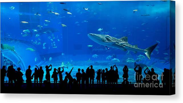 Big Canvas Print featuring the photograph Aquarium In Okinawa by Leungchopan