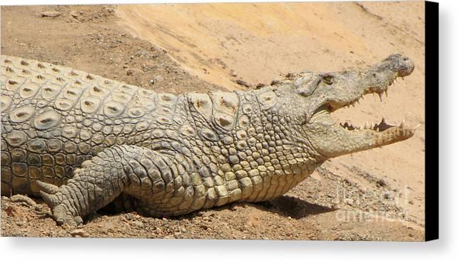 White Crocodiles Canvas Print featuring the photograph White Crocodile by Bozena Simeth