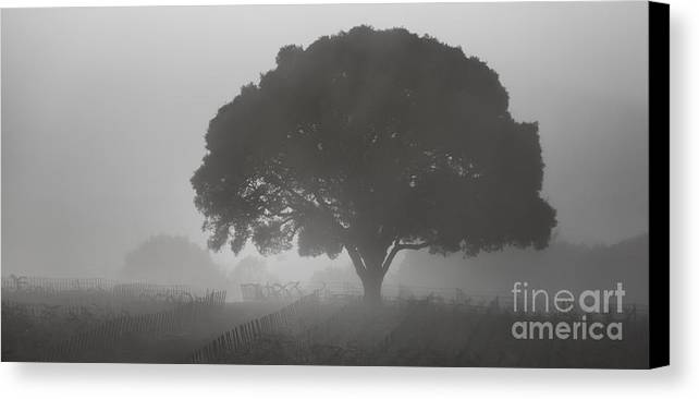 Landscape Canvas Print featuring the photograph Barbara's Tree by Steve Ruddy