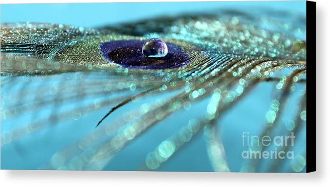 Peacock Canvas Print featuring the photograph Fantasy Drop by Krissy Katsimbras