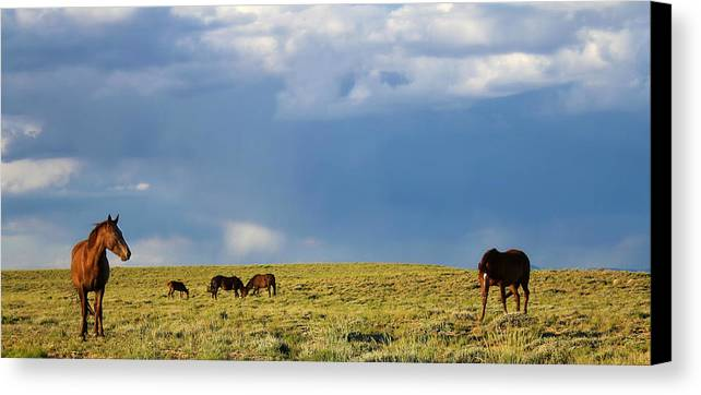Nature Canvas Print featuring the photograph Curious by Donna Duckworth