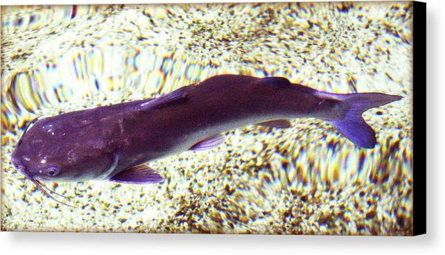 Fish Canvas Print featuring the photograph Fish In Water by Faith Williams