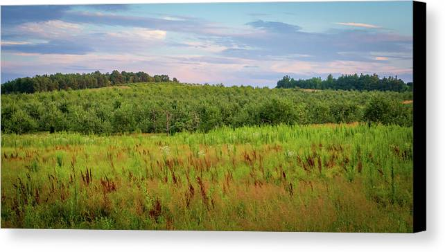 Orchard Canvas Print featuring the photograph Orchard Hills by Debbie Gracy