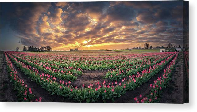 Travel Canvas Print featuring the photograph 180 Degree View Of Sunrise Over Tulip Field by William Freebilly photography