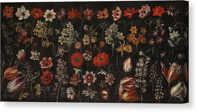 Florentine School Canvas Print featuring the painting Flower Studies by Daffodils