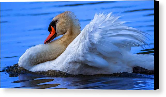 Canvas Print featuring the photograph Mute Swan 2 by Brian Stevens