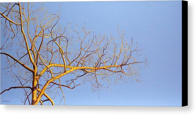Aspen Painting Canvas Print featuring the painting Aspen In The Autumn Sun by Elaine Booth-Kallweit