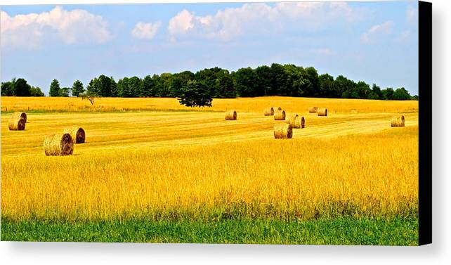 Farm Canvas Print featuring the photograph Eldorado by Frozen in Time Fine Art Photography