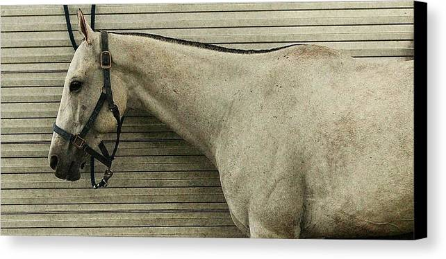 Horse Canvas Print featuring the photograph Grey Horse by Linda C Johnson
