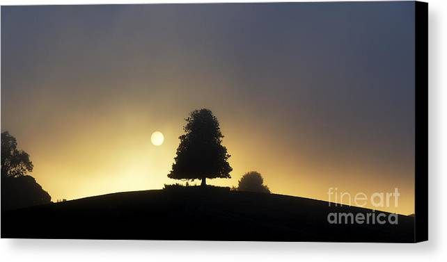 Horse Chestnut Canvas Print featuring the photograph One Foggy Morning by Tim Gainey