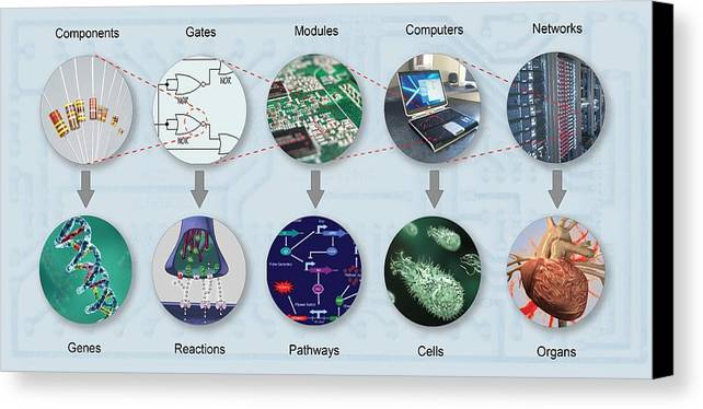 Dna Canvas Print featuring the photograph Electronic And Biologic Systems, Artwork by Equinox Graphics