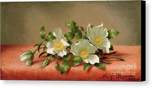 Cherokee Roses Canvas Print featuring the painting Cherokee Roses by Martin Johnson Heade