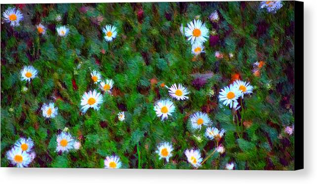 Digital Photograph Canvas Print featuring the photograph Field Of Daisys by David Lane