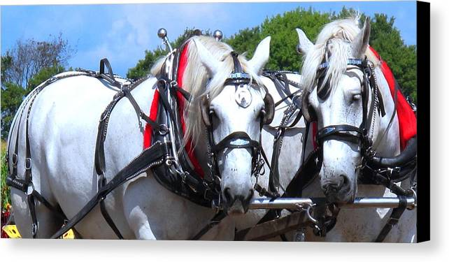 Horse Canvas Print featuring the photograph Raw Power by Ian MacDonald