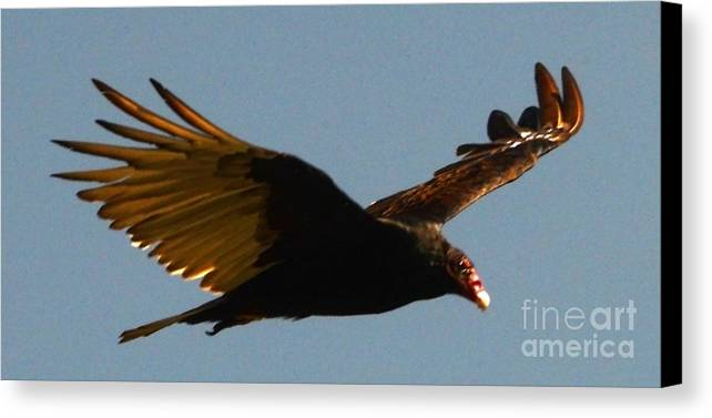 Bird Canvas Print featuring the photograph Studebaker Hawk by Jesse Ciazza