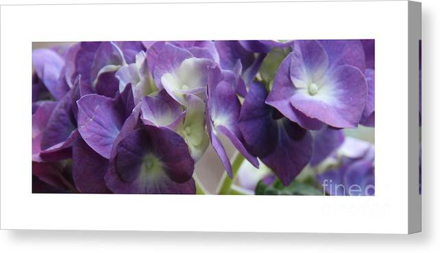 Blue; Hydrangeas: Canvas Print featuring the photograph Blue Hydrangeas by Gemblue Photography