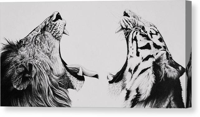 Lion Canvas Print featuring the drawing The Battle by Carlos Velasquez Art