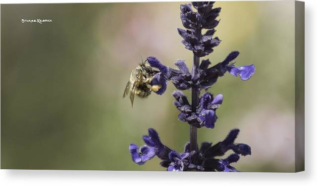 Macro Photography Canvas Print featuring the photograph The Foraging Bee II by Stwayne Keubrick