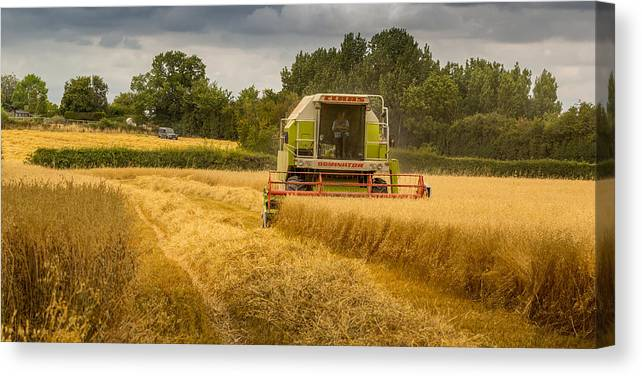 Harvest Canvas Print featuring the photograph Harvest Time by Andrew Henning