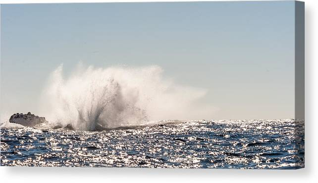 Humpback Whales Canvas Print featuring the photograph Splash by Charles McCleanon