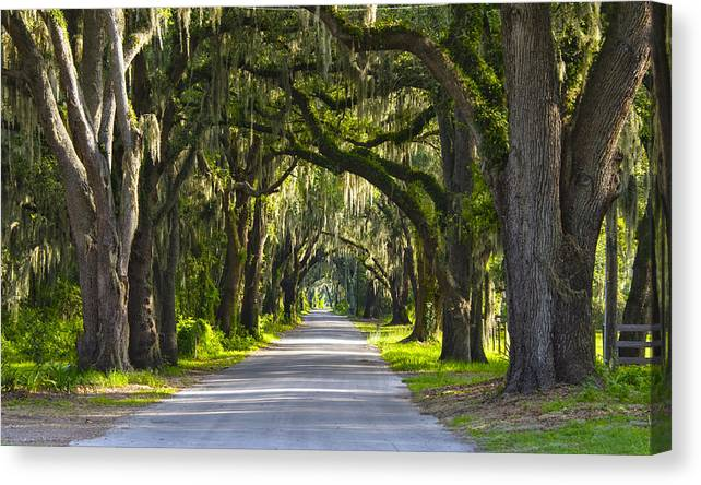Canopy Canvas Print featuring the photograph Canopy by Kenneth Blye