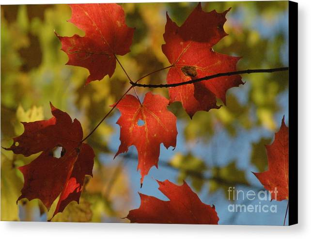Red Canvas Print featuring the photograph Rgb Plus Y by Trish Hale
